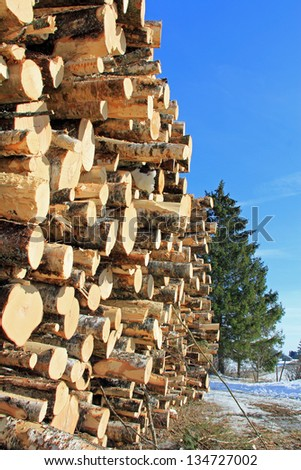 Large stack of logs and a growing spruce tree on the background. - stock photo