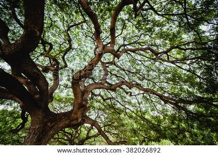 Large tree - stock photo