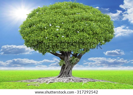 Large tree and roots with green grass meadow concept abundance of natural - stock photo
