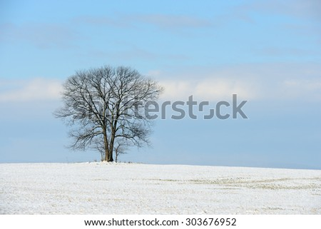Large Tree in Field on Sunny Day after Snowfall - stock photo