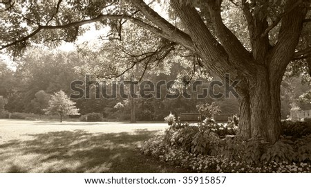 Large tree in sepia-toned park scene - stock photo
