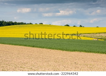 Large view at the yellow colza field - stock photo