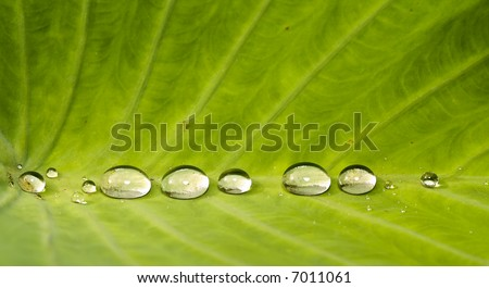 Large Water Drops in a Row - stock photo
