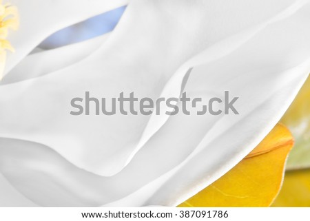 Large white petals look abstract white lines made with thin flower slices. There is an orange color leaf or sepal under the creamy magnolia slices with blurred background - stock photo