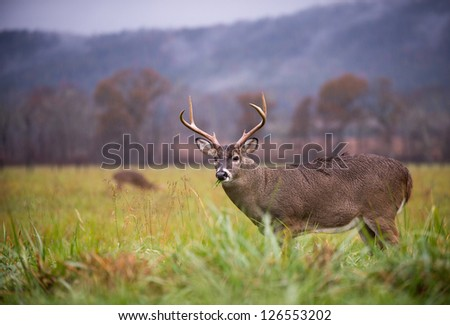 Large white-tailed deer buck standing in an open meadow - stock photo