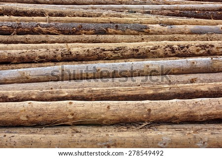 Large Wood Pile Of Old Fir Tree And Pine Logs Background Texture - stock photo