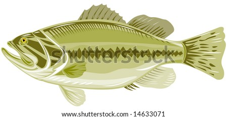 Largemouth bass - stock photo