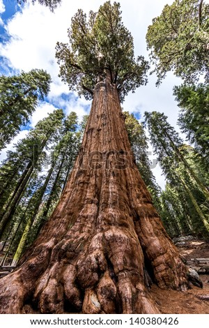 Largest tree in the world - General Sherman tree in Giant Forest of Sequoia National Park in Tulare County, California, United States. - stock photo