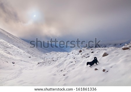 Larkya-L's pass in the Himalayas. Landscape with climbers in the distance and a dog in the foreground against snow-covered mountains. - stock photo