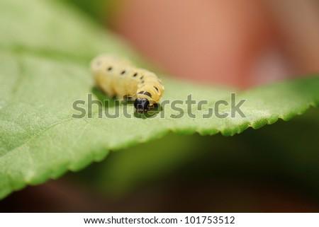 larva - stock photo