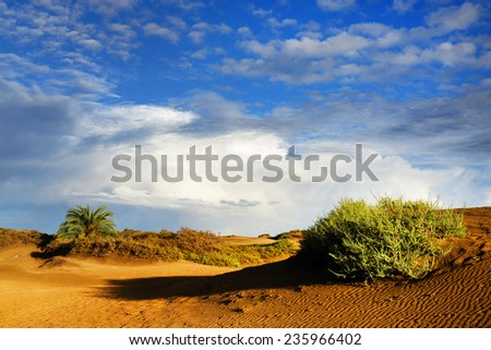 Las Dunas des Maspalomas, Gran Canaria, Spain  - stock photo