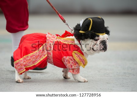 LAS PALMAS - FEBRUARY 3: Three years old Stich from Canary Islands, performs onstage during the Carnival's Dogs Contest February 3, 2013 in Las Palmas, Spain - stock photo