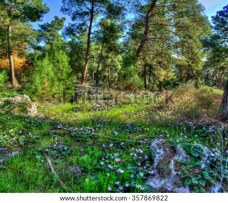 Last autumn flowers blossomed, and warmed by the heat of the sun covered with earth and stones in the pine forest - stock photo