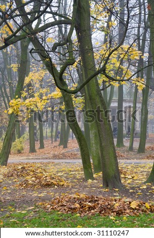 Last golden tree foliage, pedestrian path, and falling leafs  in misty autumn city park