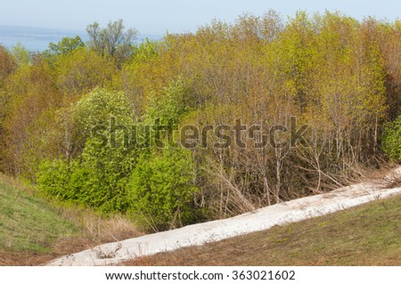 Last snow, green trees. A forest hillside in spring green with the last bit of snow. The last snow in green spring beech forest on hill. April weather. - stock photo