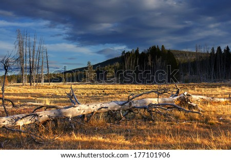 late afternoon somewhere in Yellowstone National Park, Wyoming, United States - stock photo