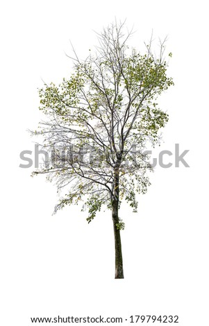 late autumn tree isolated on white background