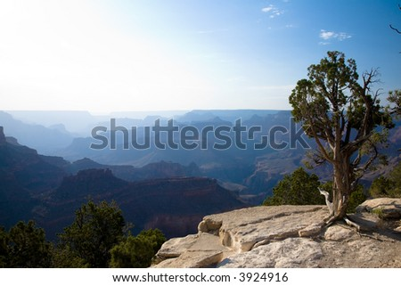 Late evening sun creating layered Silhouettes of the Grand Canyon with Cedar tree in foreground - stock photo