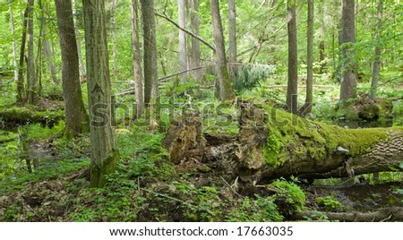 Late spring wetland with broken oak trunk lying in foreground - stock photo