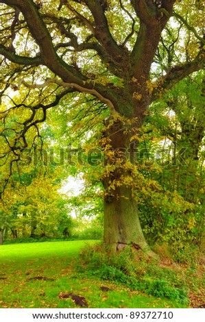 Late summer - early autumn. Space for text - stock photo