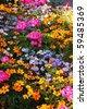 Late summer garden in full color - stock photo