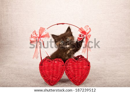 Laughing chattering valentine theme kitten sitting in red heart shaped basket with red ribbon bows on silver background - stock photo
