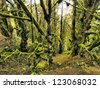 Laurel Forest, Hierro, Canary Islands, Spain - stock photo