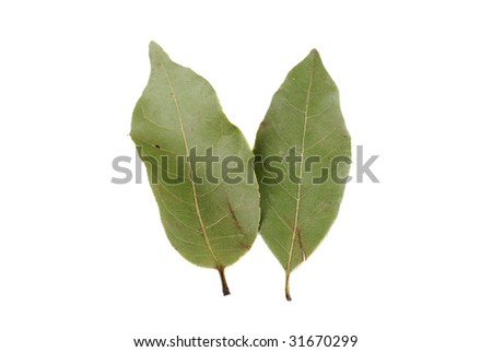 Laurel leaves on a white background. Spices for cooking.