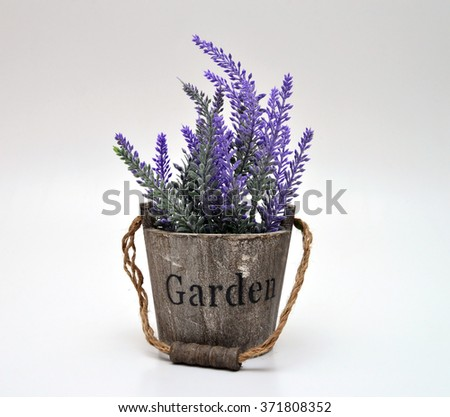 lavander flowerpot isolated on white background - stock photo