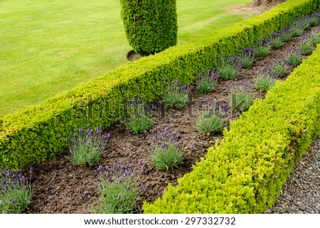 Box-hedge Stock Images, Royalty-Free Images & Vectors ...