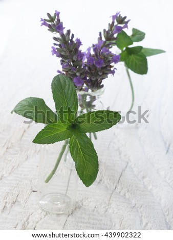 lavender and mint in the glass bottles - stock photo