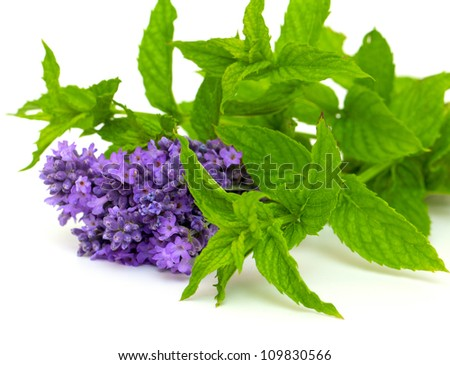 lavender and peppermint isolated on white background - stock photo