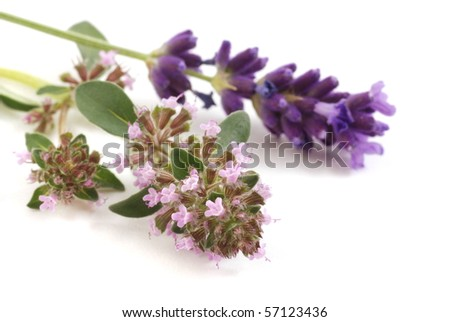 lavender and thyme flowers on the white background