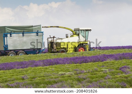 Lavender being harvested by machine - stock photo