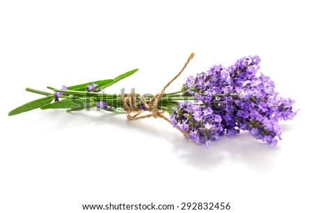 Lavender bunch isolated on white background