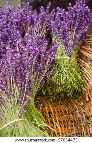 Lavender Bunches in basket - stock photo