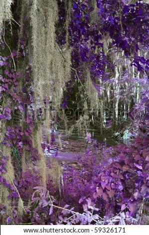 Lavender Caddo Bayou - stock photo