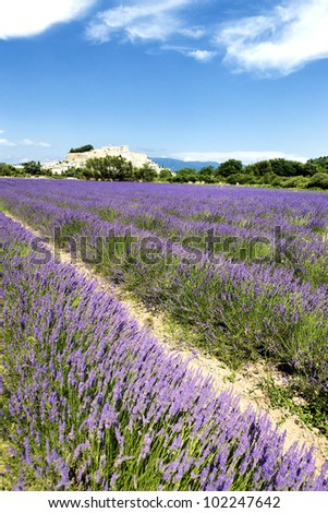 lavender field and Grignan village in France