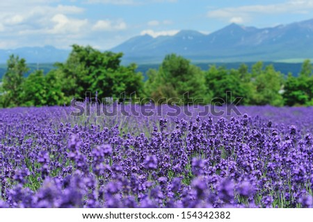 Lavender field and mountain, north of Japan - stock photo
