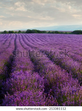 Lavender field on a background of clouds and mountains - stock photo