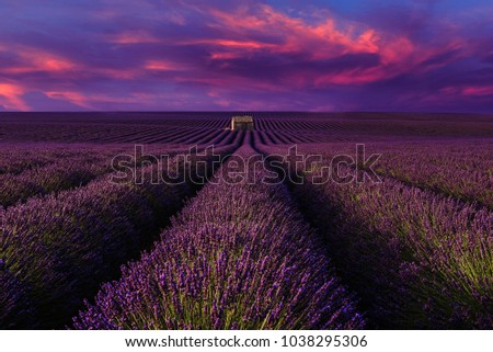 Lavender field with sunset