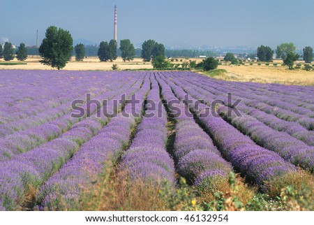 lavender fields, farming agriculture Eastern Europe