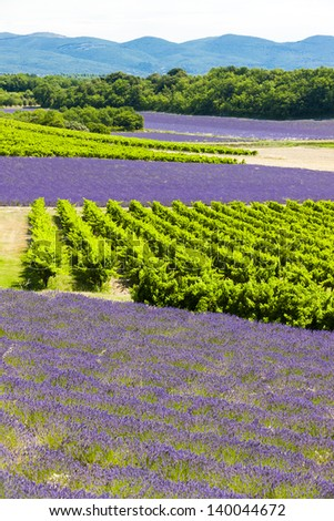 lavender fields with vineyards, Rhone-Alpes, France - stock photo