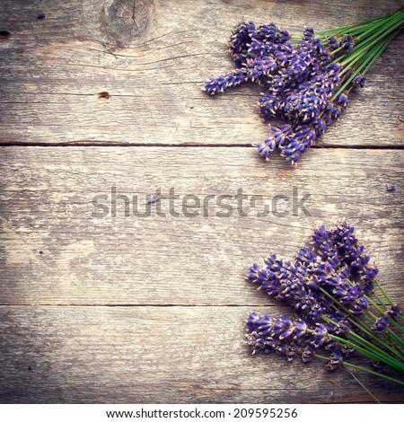 lavender flower - stock photo