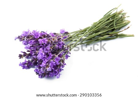 Lavender, Flower, Herbal Medicine.