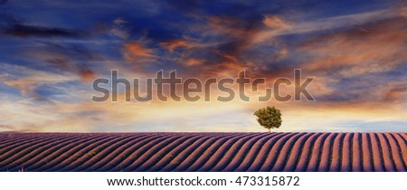 Lavender flowers blooming field, lonely tree uphill on sunset. Valensole, Provence, France, Europe.