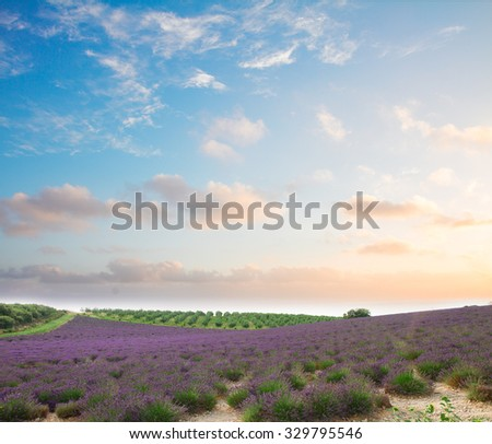 Lavender flowers field with summer blue and pink sunset sky, Provence, France - stock photo