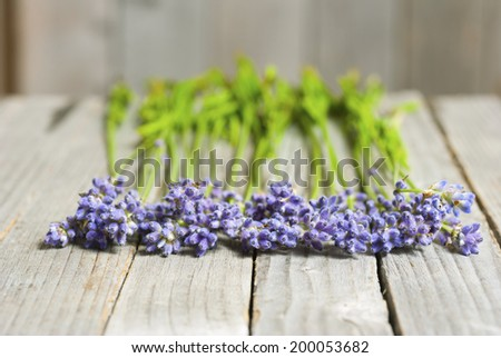 lavender flowers in a row on old wood texture background