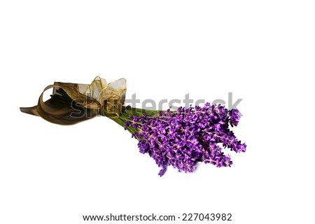 lavender flowers isolated against a white background. purple summer flowers. - stock photo