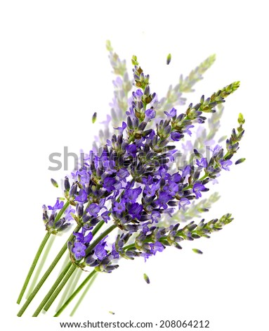 lavender flowers over white background. healthy herbs. blurred effect - stock photo